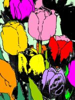 Pop Tulips by angeloaguinaldo