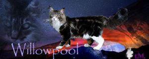 Willowpool sig by twilight0Memories