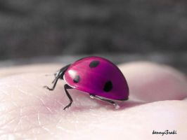 ladybug in my hand... by kennyi3raki