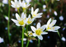 Small White Flowers by ThatFreakYouHate