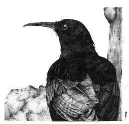 Cornish Chough Pointillism by Blkskl