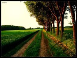 follow the way by Crank0