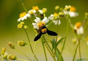 Bee and flowers by ReisLie