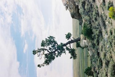 tree by in-clip247