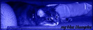 My Blue Thumples by FireLilyAS