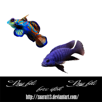 fish png by nasrzaara