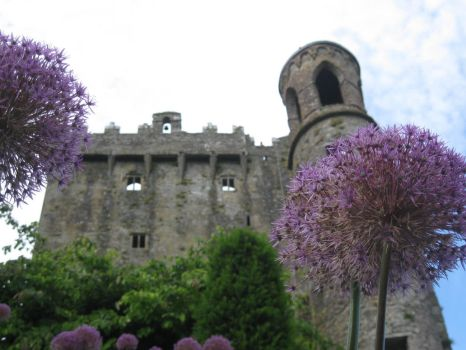 A Castle Through the Flowers by InterestinglyBoring