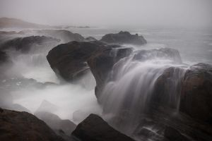 Stormy by FeralWhippet