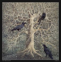 The Three Ravens by melan