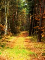 Road in forest by vaavesur