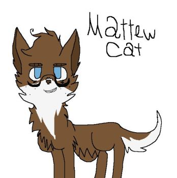 Matthew Kitty by Matthew-Kitty
