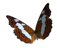 Queen Alexander Butterfly PNG by madetobeunique
