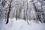 White Forest by ZeSly