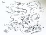 Draw Eels by Diana-Huang