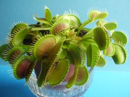 carnivorous plant 4 by MorlothStock