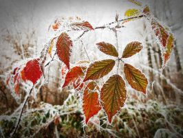 when autumn meets winter by Luperkalia418