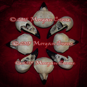 Crow Skull Formantion by MorganCrone