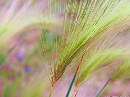 wispy grass by sataikasia
