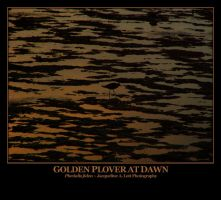 Golden Plover at Dawn by Isquiesque