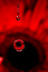 Red... drop by drop II by AlejandroCastillo