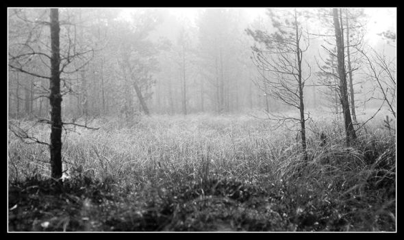 Foggy morning 1 by Skeden