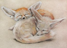 Fennec foxes by Egretink