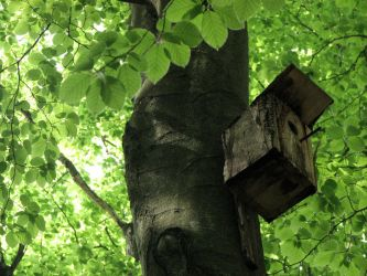 Bird Nesting Box by LunaPopelka