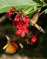 Cayman Butterflies by passionandsoul