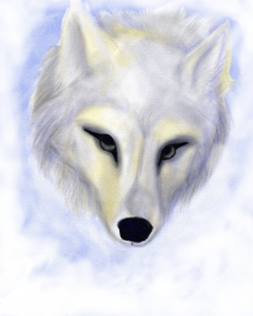 The wolf's face by PolnochsArt