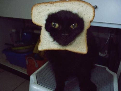 My breading cat :D by xPsych0siiSx