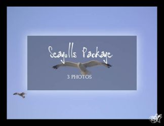 Seagulls Package by Arsenica-stock