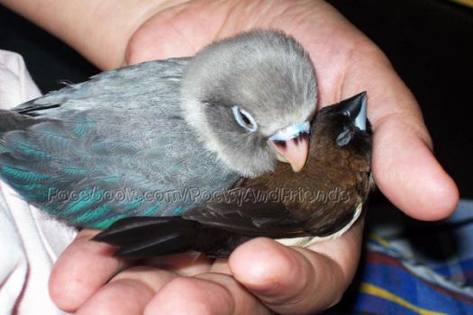 Finch Pillow by emmil