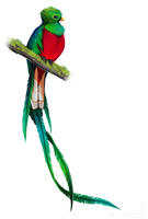Resplendent Quetzal by witherlings