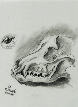Wolf skull by SulaimanDoodle