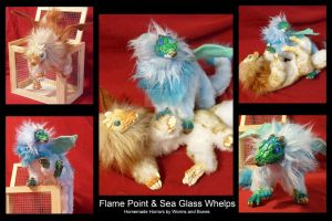 Flame Point and Sea Glass Barbary Whelps by WormsandBones