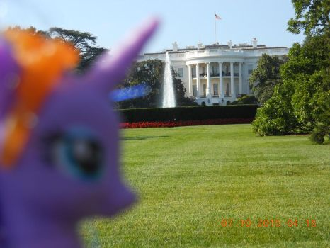 Luna at The White House by Disneybrony