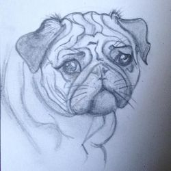 Sad Pug Puppy by VictoriaThorpe