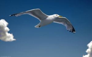 Seagull by pinkquilldesign