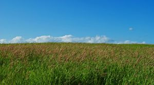 Green Fields and Blue Skies by apertureaddict