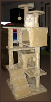 Kitty Condo IMG 3839 by WDWParksGal