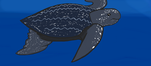 Leatherback sea turtle by Moonstone27