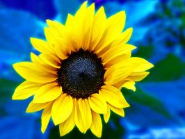 Yellow petals 2 by friartuck40