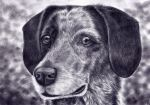 Portrait of a Dog by bleistiftkind