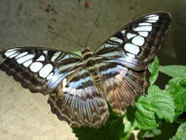 Butterfly House occupant 14 by duggiehoo