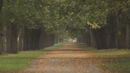 Allee by UdoChristmann