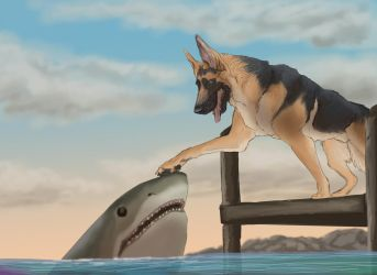 Shark and The Shepherd by Seyward