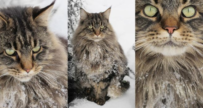 cat in the snow by nuggiii