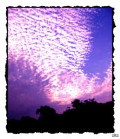 Purple Sky by larmycreations