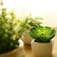 Succulents by the Window by barananduen