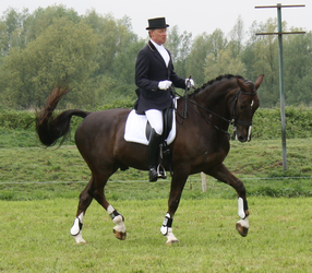 Dressage stock 11 by ByMelody